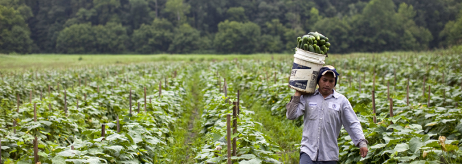 How the Broken Immigration System Hurts Farmworkers Who Pick Our Crops